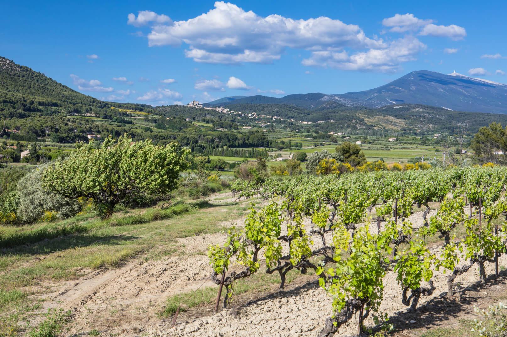 Los viñedos del Ventoux