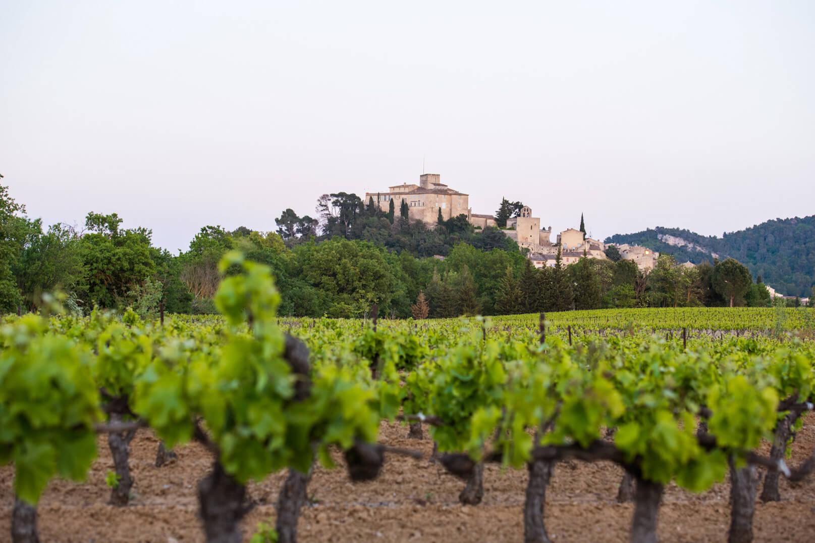 Los viñedos del Luberon