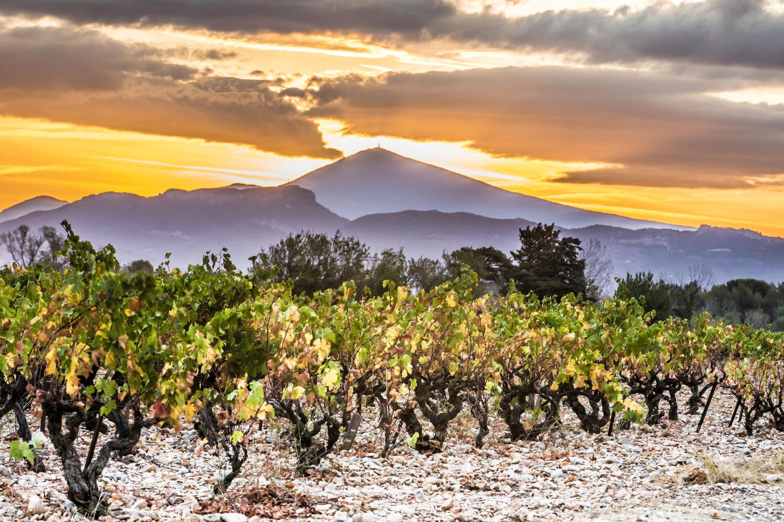 Vignobles de la vallée du Rhône - Kessler