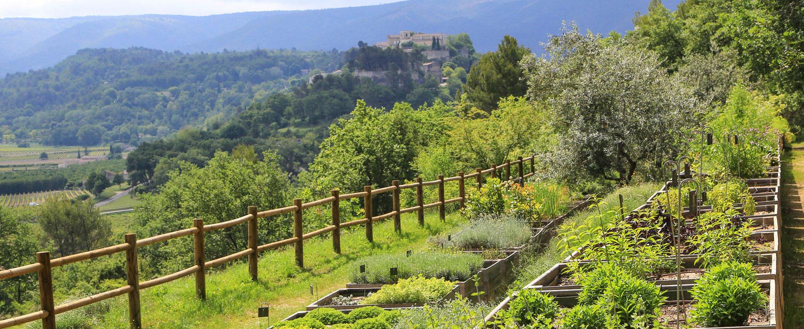 Visita botánica en el Domaine de la Citadelle