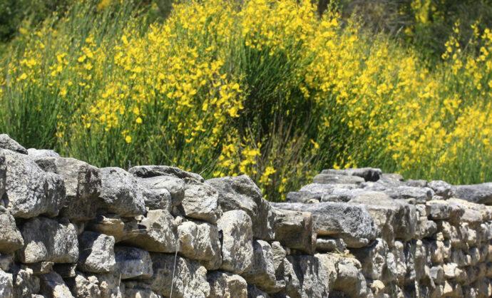 Por los senderos botánicos del Vaucluse