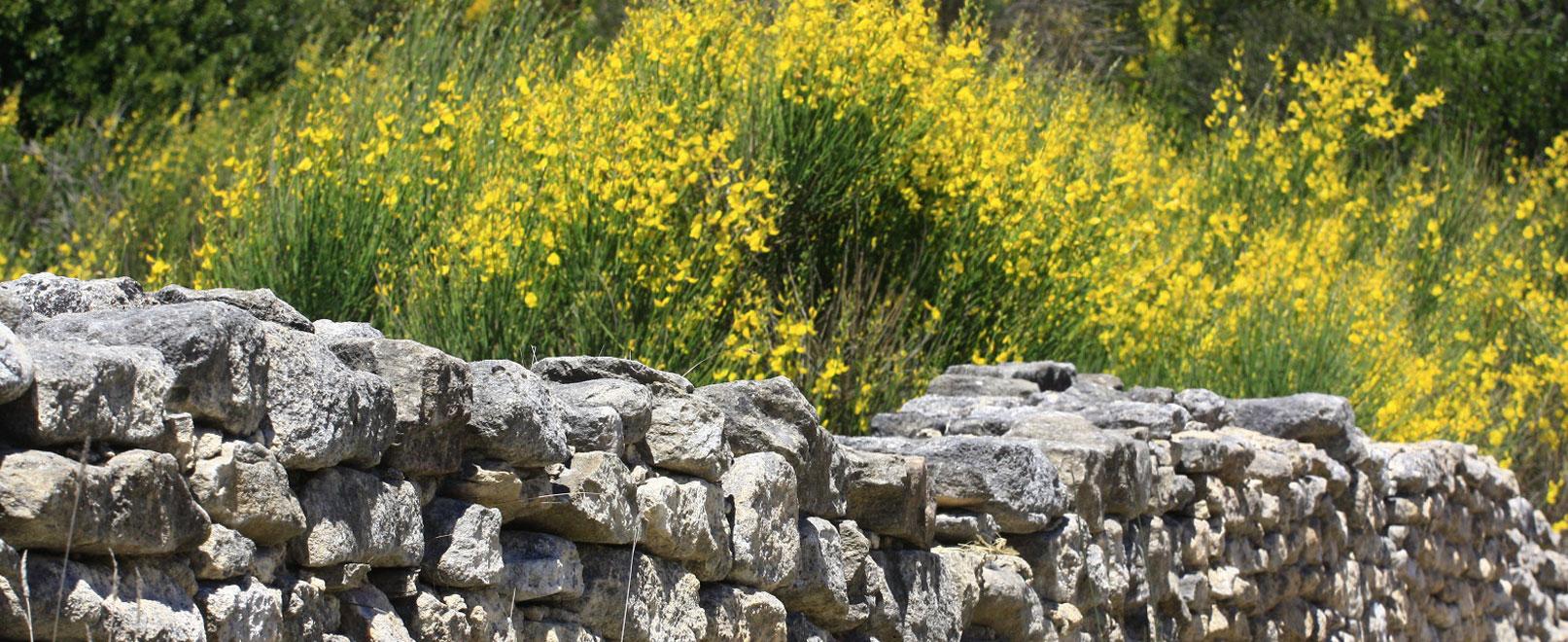 Por los senderos botánicos del Vaucluse © Hocquel