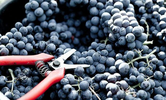 Las mejores ideas para descubrir los viñedos de una forma original
