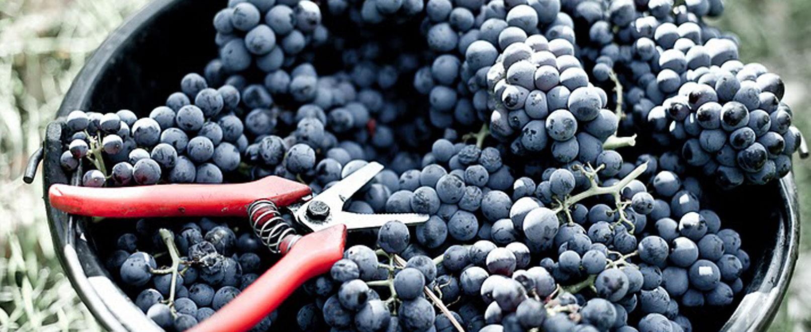 Las mejores ideas para descubrir los viñedos de una forma original  © Chateau-Pesquier
