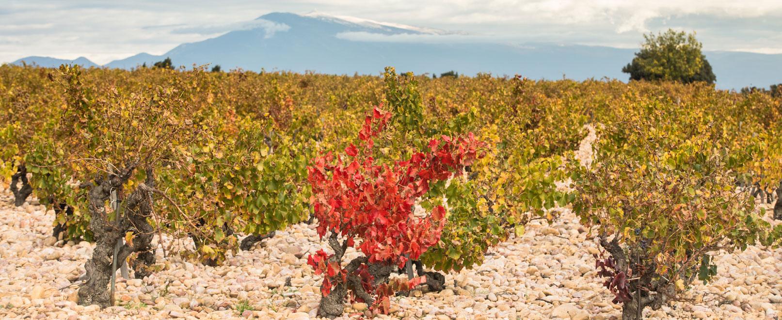 Vinos y viñedos del vallee del Rodano © Kessler